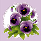 Lavender Pansies. Garden-fresh lavender pansies with buds in a lavender frame. EPS8 organized in groups for easy editing Stock Photo