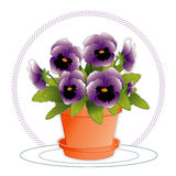 Lavender Pansies in Flowerpot. Lavender pansies in a clay flowerpot with saucer Stock Images