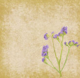 Lavender on paper Royalty Free Stock Images