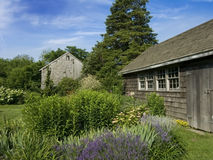 Lavender patch with rustic shed. A summer garden shot featuring lavender and rustic outbuildings royalty free stock photo