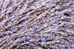 Lavender pattern Stock Image