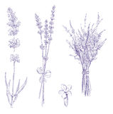 Lavender pencil drawing set Royalty Free Stock Photography