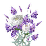 Lavender and peony bouquet Stock Image
