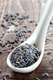 Lavender petals on spoon Stock Images