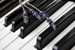 Lavender on Piano Keyboard Royalty Free Stock Photo