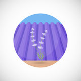 Lavender plant  flat icon Stock Images
