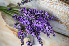 Lavender plant flowers bunch. Fresh cut fragrant lavender plant flowers bunch stock image
