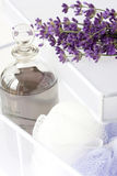 Lavender plant and oil in white box Stock Images