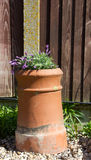Lavender plant in a reclaimed chimney pot Royalty Free Stock Photos