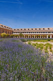 Lavender plants and historical buildings in Aranjuez, Spain Royalty Free Stock Photography
