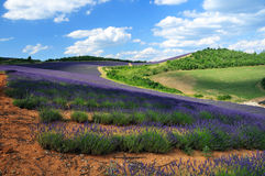 Lavender. The plateau of Valensole in Provence Royalty Free Stock Photos