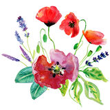 Lavender and poppy flowers. Stock Photos