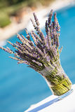 Lavender in a pot Royalty Free Stock Images