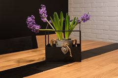 The lavender in a pot. Lavender in a pot on the table royalty free stock images