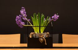 The lavender in a pot. Lavender in a pot on the table royalty free stock image