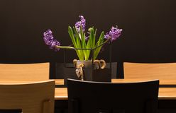 The lavender in a pot. Lavender in a pot on the table stock photography