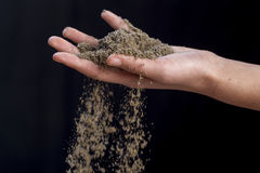 Lavender powder flows from hand. Stock Image