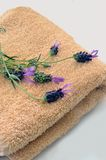Lavender Preparation Stock Photos