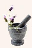 Lavender Preparation Stock Image