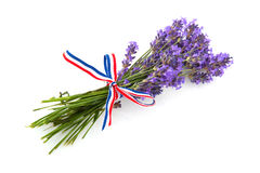 Lavender from the Provence Royalty Free Stock Photos