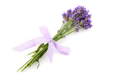 Lavender from the Provence Stock Photography