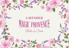 Lavender provence card. Stock Images