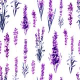 Lavender in Provence Field Seamless Pattern. Lavender Field Seamless Pattern. Watercolor or Aquarelle Paintings of Provence Lavandula. Hand Drawn Tea Herbs stock illustration