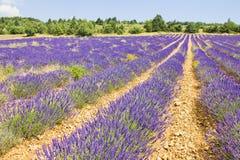 Lavender in Provence, France. Landscape in a lavender in Provence, France Royalty Free Stock Photography