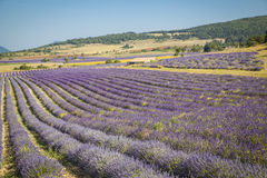 Lavender Provence France Royalty Free Stock Photography