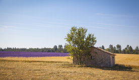Lavender Provence France Stock Photography
