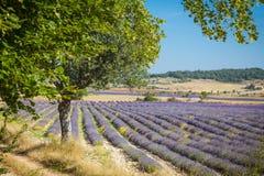 Lavender Provence France Stock Image