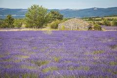 Lavender Provence France Stock Photo