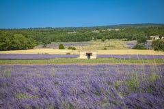 Lavender Provence France Stock Images