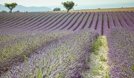 Lavender Provence France Stock Photos