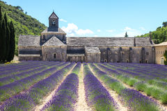 Lavender in Provence France Royalty Free Stock Photos