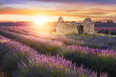 Lavender in Provence at sunset Stock Photography