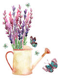 Lavender, Provence, watercolor. Watercolor lavender, watering can and butterflies. Hand painted illustration Royalty Free Stock Image