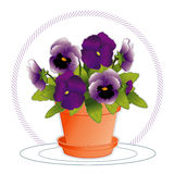 Lavender & Purple Pansies. Deep purple and lavender pansies with buds in a flowerpot and saucer. Viola hortensis. EPS8 organized in groups for easy editing Royalty Free Stock Image