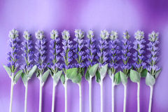 Lavender queue. 12 stalks Royalty Free Stock Photography