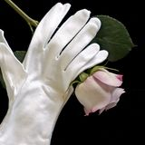 Lavender rose white gloves sq Royalty Free Stock Image