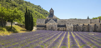 Lavender rows to old castle. In France Stock Image