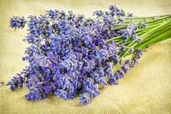 Lavender on rustic jute fabric Royalty Free Stock Images