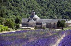 lavender s αβαείων Στοκ Φωτογραφία