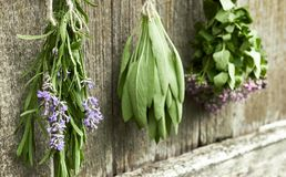 Lavender, sage and thyme on old wooden rural background. Fresh herbs: lavender, sage and thyme hanging to get dried over old shabby rustic wooden background stock photos