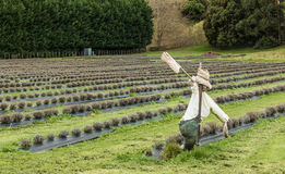 Lavender Scarecrow Royalty Free Stock Photography