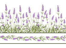 The Lavender Seamless frame line Stock Photos