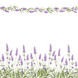 The Lavender Seamless frame line Royalty Free Stock Photo