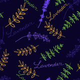 Lavender Seamless pattern. Lavender. Seamless pattern  on the blue background. Hand-drawn original background Royalty Free Stock Photos