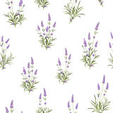 The Lavender Seamless pattern. Bunch of lavender flowers on a white background. Vector illustration Stock Photo