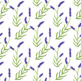 Lavender. Seamless pattern with flowers. Hand Royalty Free Stock Photos